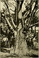 The ornamental trees of Hawaii (1917) (14579520627).jpg