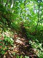 The road to Iwaya Kannon 1.jpg