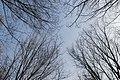 Toppen van verschillende bomen mallebos.jpg