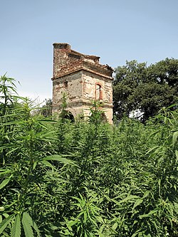 Cannabis in France - Wikipedia