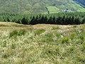 Towards Succothmore - geograph.org.uk - 532991.jpg