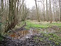 Track skirting Mansom Plantation - geograph.org.uk - 1196330.jpg