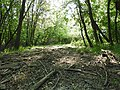 Trail in St. Norbert Provincial Park, Manitoba.jpg