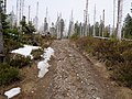 Trail near Sonnenkappe 08.jpg
