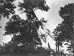 Training slide depicting a Sopwith 1 1-2 Strutter crashed into a tree (17429753525).jpg