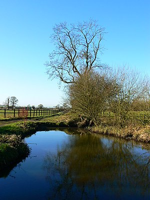 English: Tree and pond on farm track near Marr...