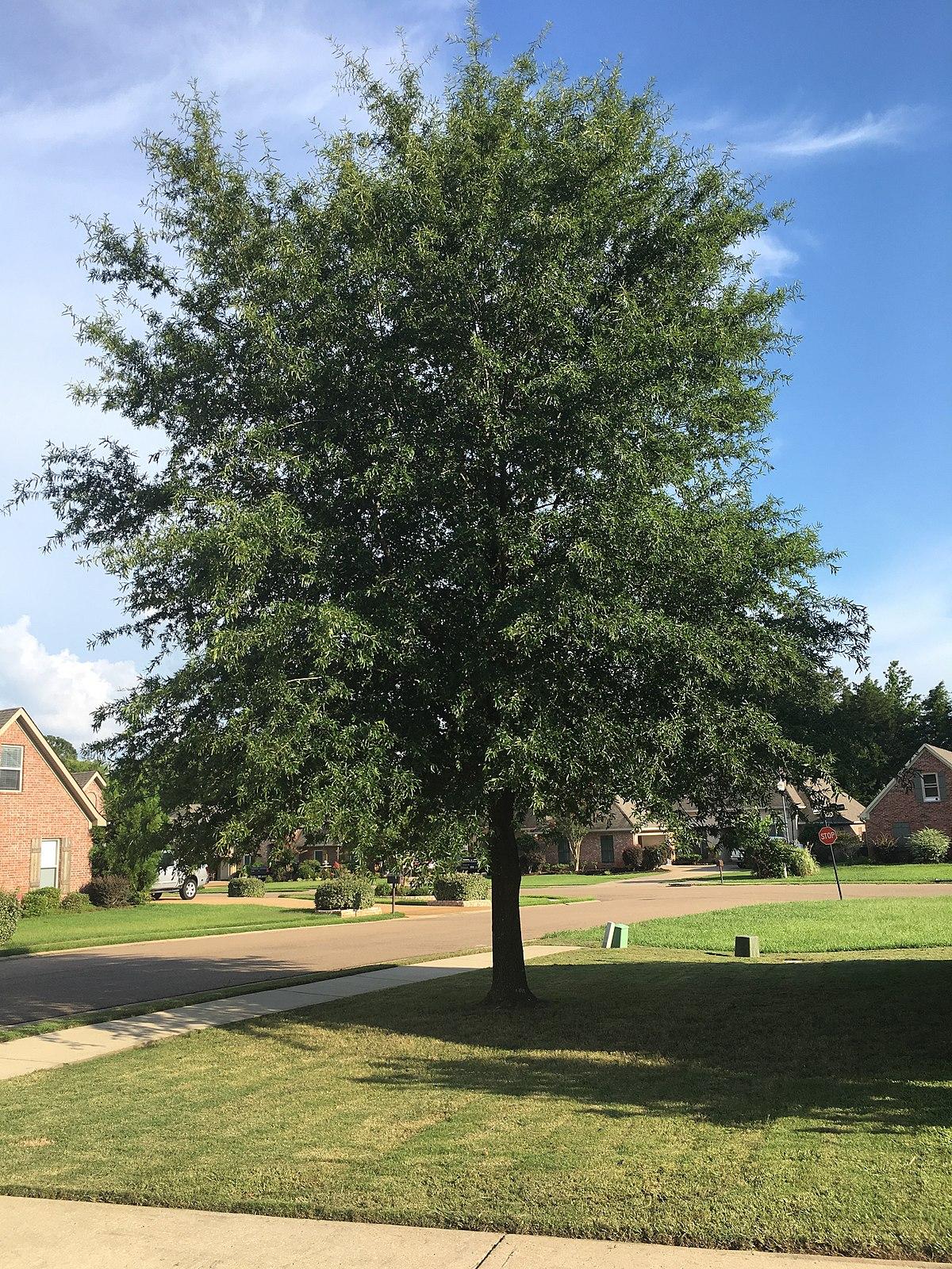 Rye: 105 properties found