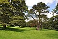 Trees in Ilam Park - geograph.org.uk - 1458239.jpg