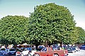 Trees in a square in northern old Rhodes 2010.jpg