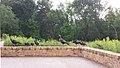 Turkey play date at Minnesota Valley National Wildlife Refuge in Minneapolis (14813517469).jpg