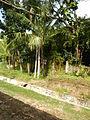 Tuy,Balayan,Batangasjf9755 19.JPG