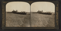 Twenty-six horse combined harvester cutting barley, Sacramento Valley, Cal, from Robert N. Dennis collection of stereoscopic views.png