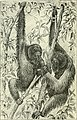 Two years in the jungle - the experiences of a hunter and naturalist in India, Ceylon, the Malay Peninsula and Borneo (1904) (14768556244).jpg