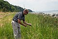 US Navy 090730-N-7952W-001 Seth Berry, natural resources manager at Naval Support Facility Indian Head, Md., assesses the growth of native wetland grasses along the completed first phase of the base's shoreline stabilization pr.jpg