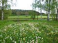 Ufervegetation in Katzenrohrbach.jpg