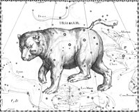 The drawing Hevelius made of Ursa Major. The drawing is made as if being viewed from outside the celestial sphere.