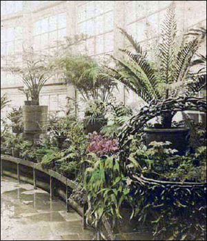 United States Botanic Garden - Palm House, 1870
