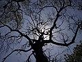 VYP Sad tree.jpg