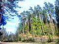 Valdaysky District, Novgorod Oblast, Russia - panoramio (3414).jpg