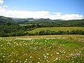 Valley of the river Algeti.jpg