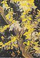 Van Gogh - Blühender Akazienzweig.jpeg