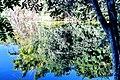 Vegetação refletida no Lago da nascente.jpg