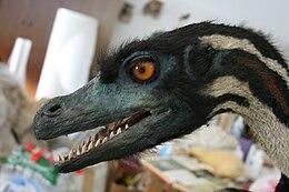 A Velociraptor mongoliensis rekonstrukciója