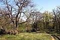 Via degli Dei, Monzuno, discesa da Monte Adone a Brento 04.jpg