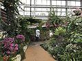 View in Greenhouse in Aoshima Subtropical Botanical Garden.jpg
