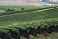 Vignoble Champagne Cl j Weber02 (23049497924).jpg