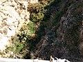 Vistas de Huércal de Almería 011.jpg