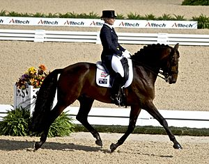 English riding - Dressage style English attire and tack in competition.