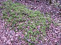 WLE2019 - Frasne-Bouverans - Moss close-up 01.jpg