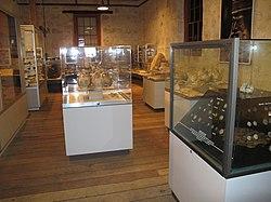 WTF Marlene Oostryck Maritime Museum display cases 1.jpg