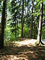 Wald - Aggertalsperre - geo.hlipp.de - 15054.jpg