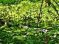 Wald - panoramio (3).jpg