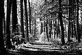 Waldweg - Wanderweg im Wald.jpg