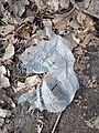 Walmart bag in leaf litter.jpg