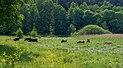 Walsdorf Aurachtal Auerorchsen 5221856.jpg