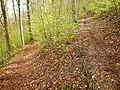 Wanderweg beim Rechberg - panoramio.jpg