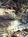 Watercourse un krima.jpg