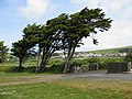 We three trees - geograph.org.uk - 1325490.jpg