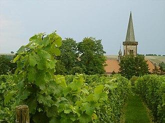 Rheinhessen (wine region) - Vineyards at Worms-Pfeddersheim