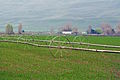 Whitstran Irrigation.jpg