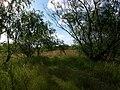 Willows - panoramio.jpg