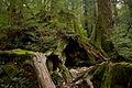 Wilson Stump 03.jpg
