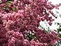 Windsor IMG 9606 (4546932700).jpg