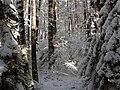 Winter 2008 Bayreuth - Saas.jpg