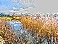 Winters day walk (11565692235).jpg