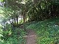 Wooded Section Of Cornish Coastal Path - geograph.org.uk - 1481105.jpg